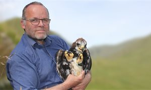 Golden eagle adopted by Green MSP Andy Wightman disappears in Highland Perthshire