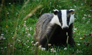 Landowners call for tougher punishments for wildlife crime